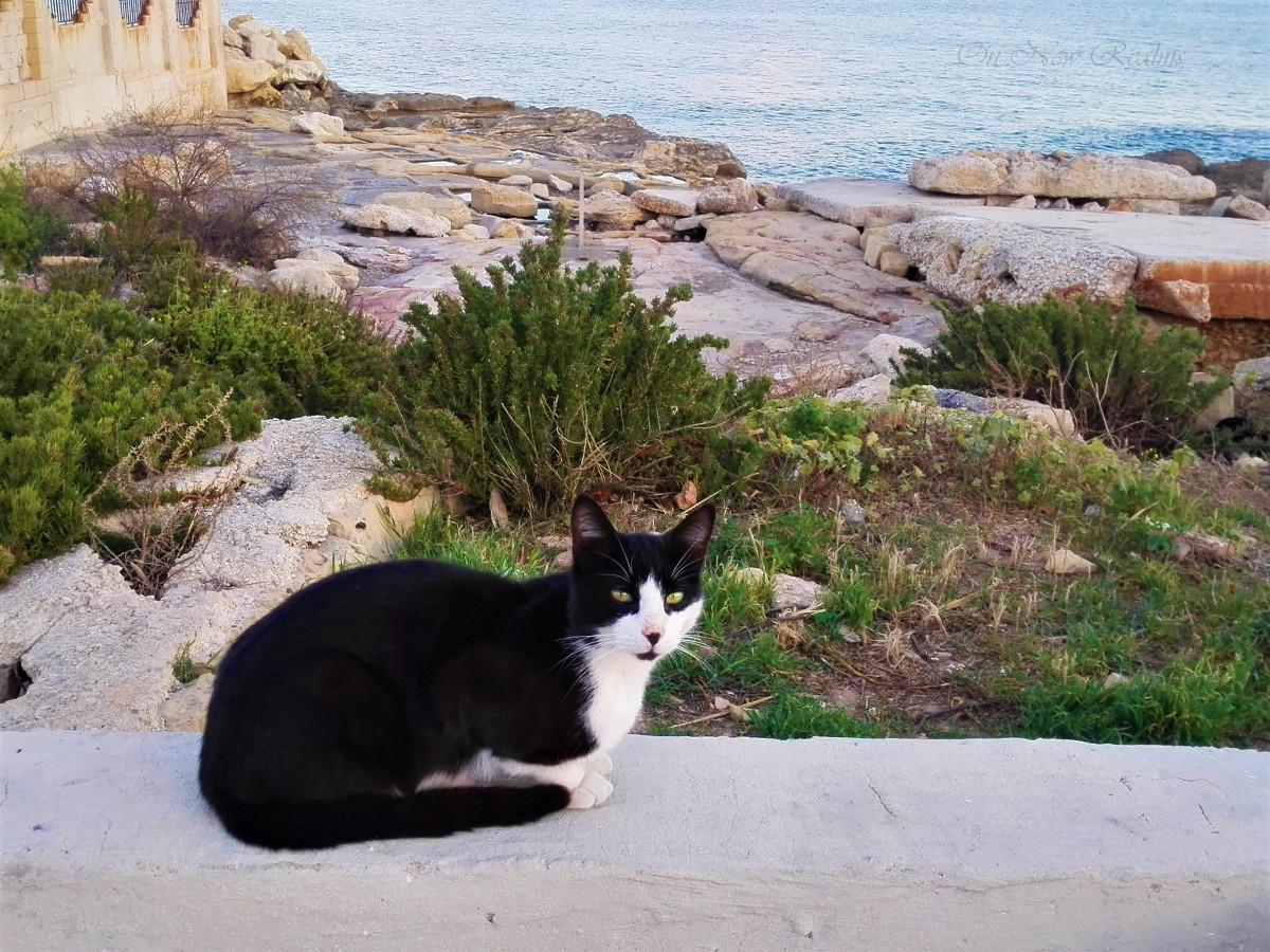 Cat-Malta-2