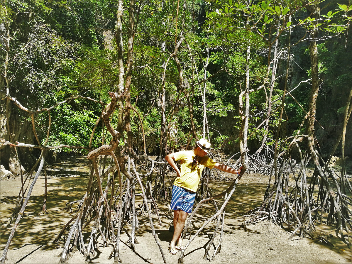 Panak-Island-Mangrove-forest-Thailand-2