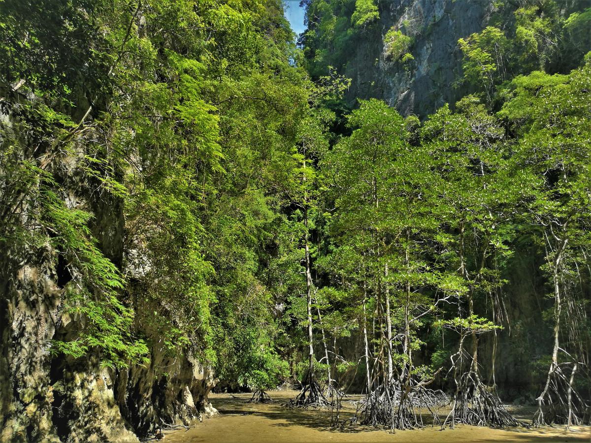 Panak-Island-Mangrove-forest-Thailand-3