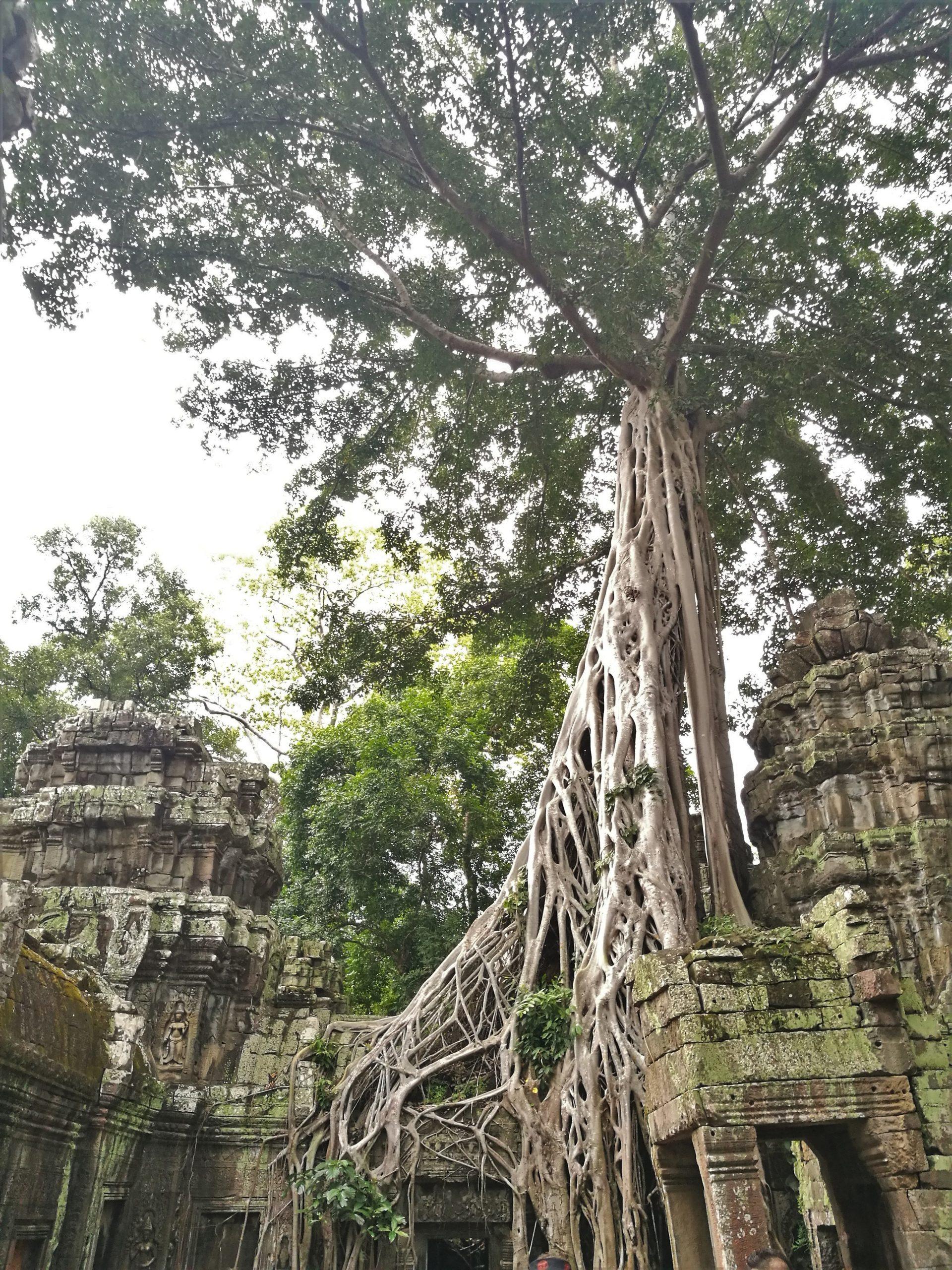 Ta-Prohm-Temple-3-Cambodia-scaled